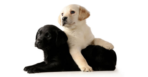 Puppies 101