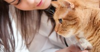 Feline Dementia: Symptoms and Treatments