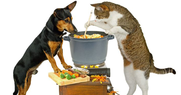 Thanksgiving food for your pet?