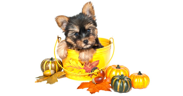 Thanksgiving Leftovers For Your Pets