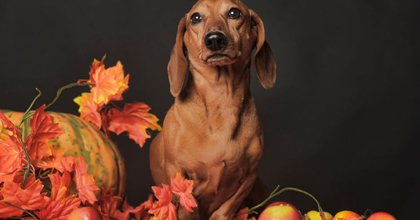 Thanksgiving safety for pets