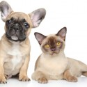 Top things that you need to know about pet insurance