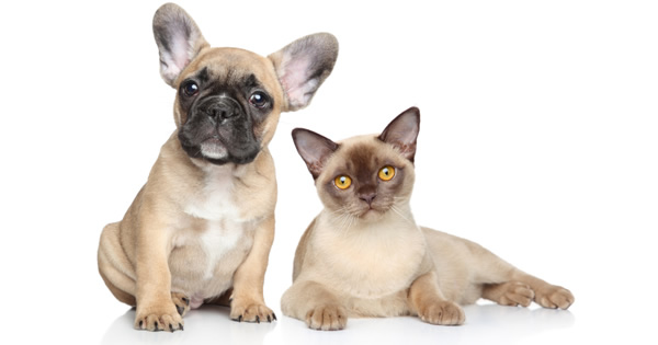 Top 10 Questions About Pet Health Insurance