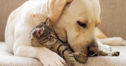 Understanding False Pregnancy In Dogs