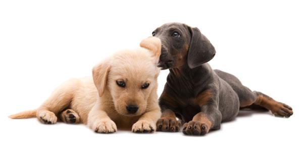 Understanding Swimmer Puppy Syndrome