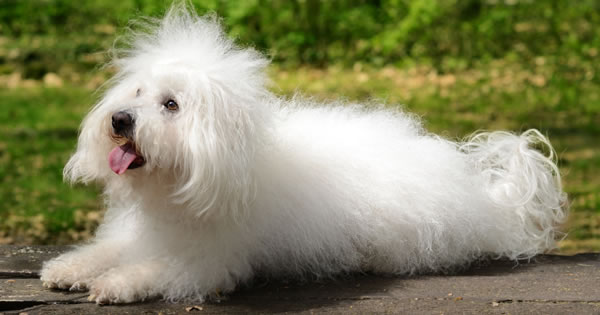 Understanding White Shaker Dog Syndrome