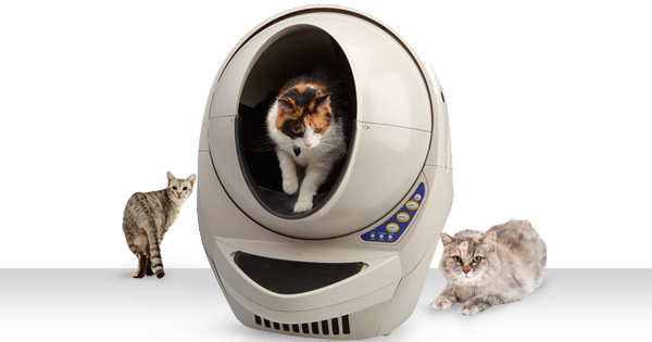 How To Prevent Litter Box Problems