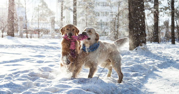 Get your pets active during winter!