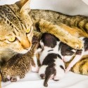 Getting a New Cat? Adopting and Buying Tips for Future Cat Parents