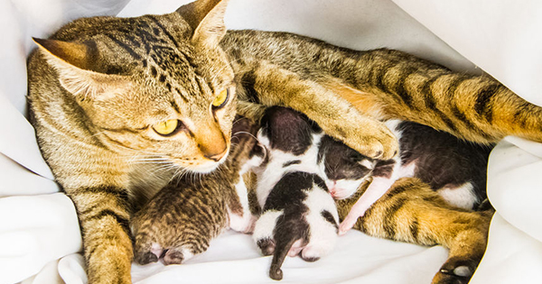 Adopting And Buying Tips For Future Cat Parents