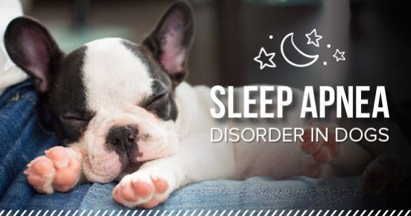 What is Canine Sleep Apnea?
