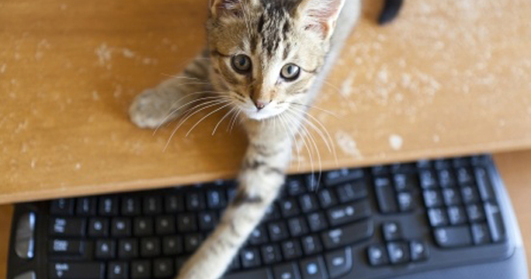 Popular Cat Blogs
