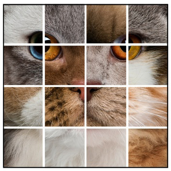 Cat Coat Colors