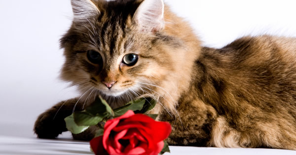 Pamper Your Cat this Valentine