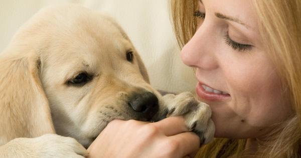 Destructive Behavior In Dogs