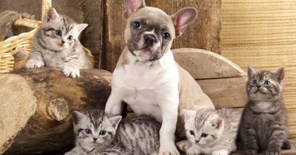 Diseases in Dogs and Cats