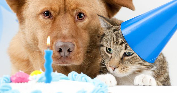 How to Make a DIY Birthday Cake for Your Cat