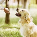 Dog Commands When Training Dogs