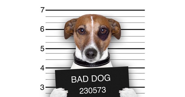 What to do if your dog is impounded?