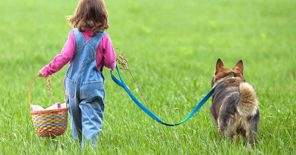 How To Stop Your Dog From Pulling On A Leash