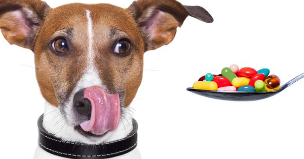 Must Knows About Your Pets Medications