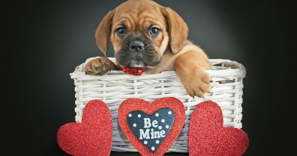 Pamper Your Dog this Valentine