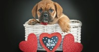 Ideas to Pamper Your Dog This Valentine's Day!