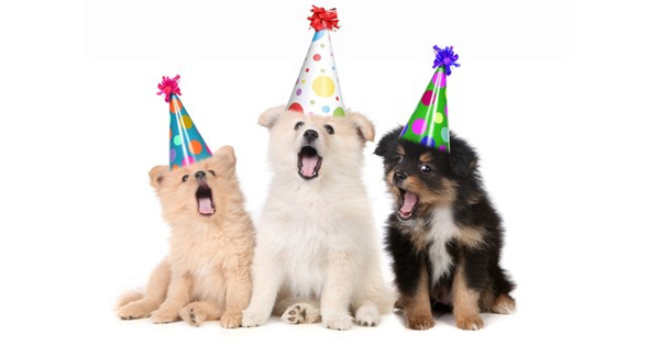 How To Make A Success Of Your Dogs Birthday Party