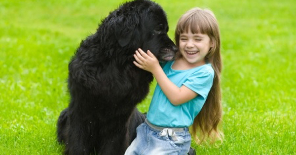 A Dogs Body Language