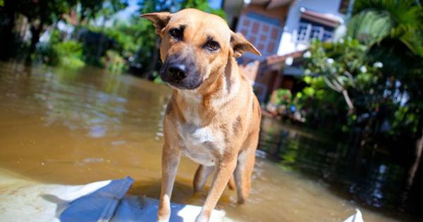 Can Dogs Sense Earthquakes