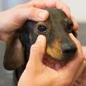 Eye health tests for pets
