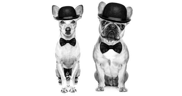 Canine Oscars
