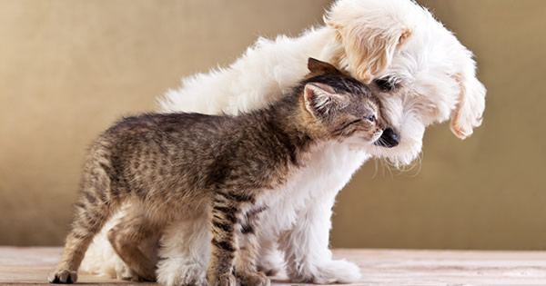 Frequently Asked Questions About Pet Behavior