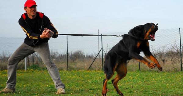 How To File A Dog Liability Claim