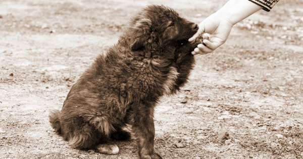 How To Help An Animal Rescue Organization