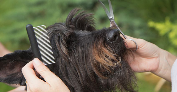 how-to-groom-a-dog