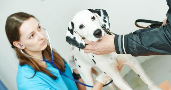 Is My Dog Deaf