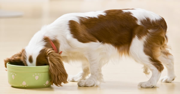 Nutritional Requirements for Dogs