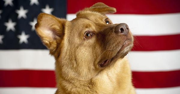 Pet Liability 101