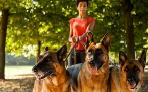 Pet Sitter, Pet Resort or Boarding