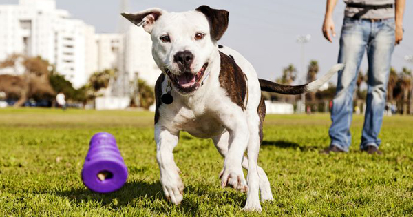 A Position On Pit Bulls