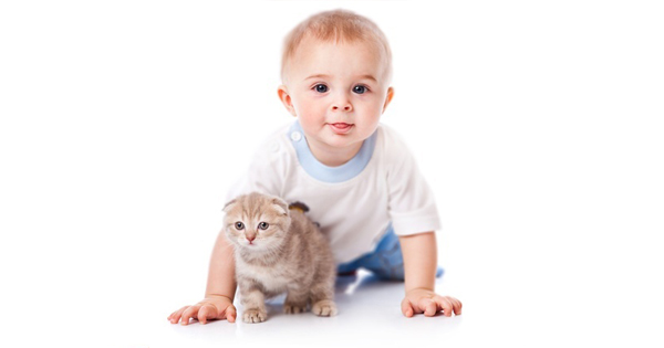 Preparing Your Cat For The Arrival Of Your New Baby