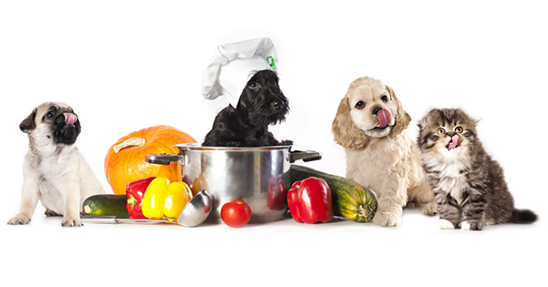 Protein Diets for Pets