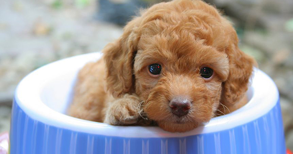 Do Puppies Get Hiccups