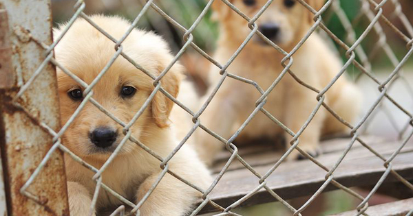 Puppy Mill Facts