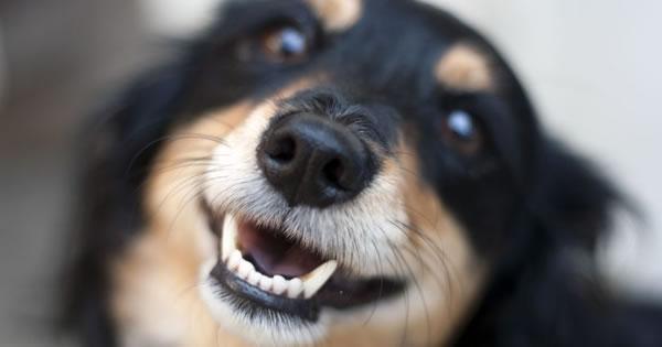 Raw Dog Food Overall Consensus