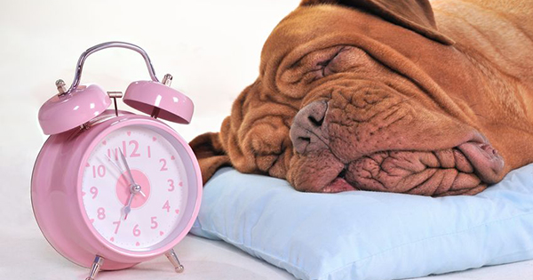 Sleep Apnea in Dogs