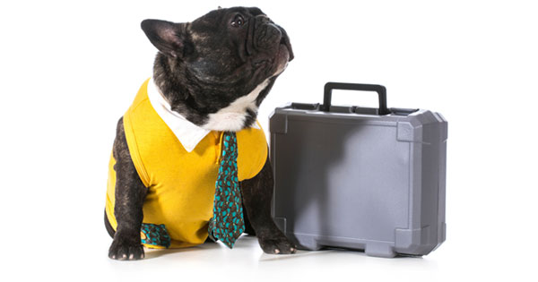 Taking Your Dog To Work Dos And Donts