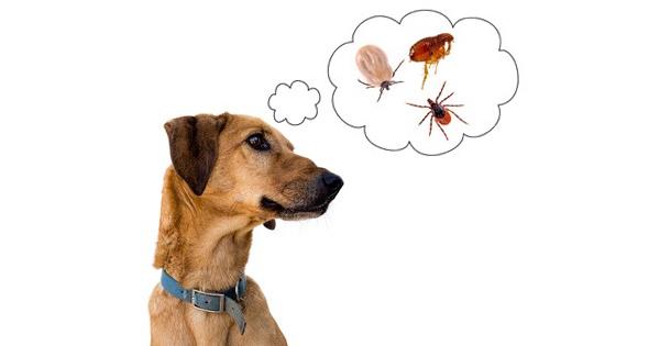 Tick Borne Diseases In Dogs