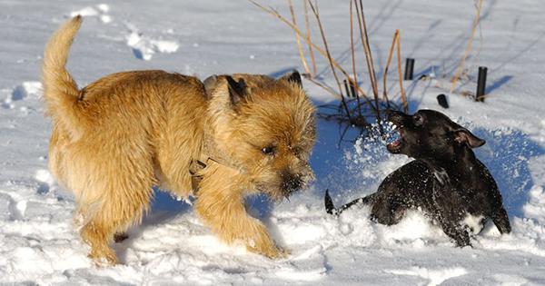 Understanding Aggressive Dogs